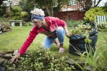 Désherbant: Sept désherbants naturels et sans produits chimiques que vous pouvez fabriquer à la maison