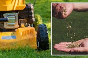 Jardinage : des «techniques simples» pour aider votre pelouse à «fleurir» cet été - conseils d'experts