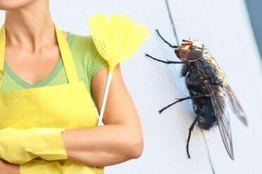 Comment se débarrasser des mouches de la maison - les 3 astuces clés pour éliminer les mouches embêtantes