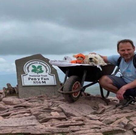 Le labradoodle mourant termine sa dernière marche avec le propriétaire à travers la montagne galloise dans une brouette
