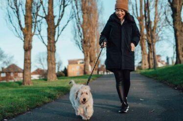 Les propriétaires de chiens mis en garde contre un problème dangereux affectant les animaux de compagnie «tous les jours» lors des promenades