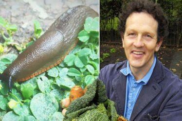 Monty Don partage un incroyable antiparasitaire naturel pour tuer les limaces et les escargots
