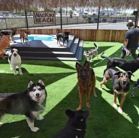 Possédez-vous l'une des races de chiens les plus chics du Royaume-Uni ?  Top 10 des chiens chics révélés