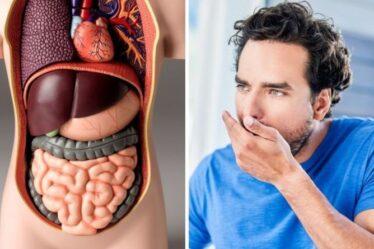 Santé intestinale: les 7 signes que VOTRE intestin est malsain