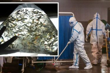 Craintes d'épidémie en Inde: des poissons «tueurs» déployés pour lutter contre une maladie mortelle alors que 10 000 personnes infectées