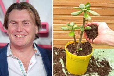David Domoney: Choisissez la bonne plante pour vous sentir mieux à l'intérieur et d'autres tâches pour l'automne