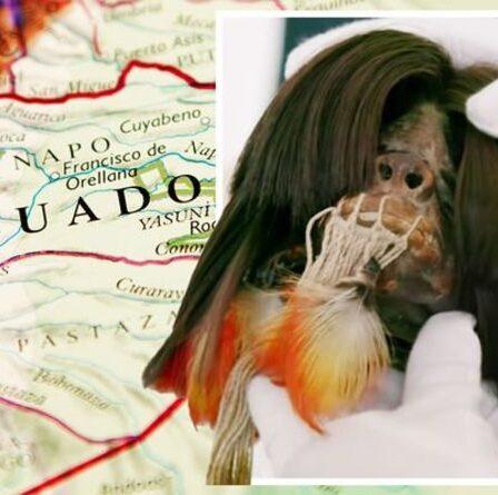 """Des archéologues stupéfaits par la """"révélation choquante"""" d'une tête réduite en Amérique du Sud"""