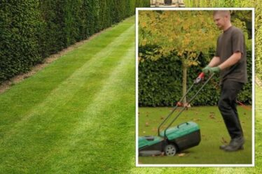 «Donnez une dernière coupe à votre pelouse!»  Un expert en jardinage partage les travaux de jardinage d'octobre