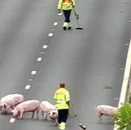 Trafic M62 le plus récent: D'énormes retards près de Manchester alors que les PIGS pénètrent sur l'autoroute