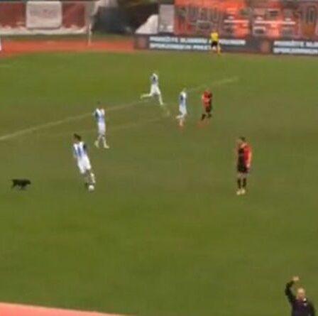 Un chien prend d'assaut le match de football de Premier League et fait honte aux joueurs