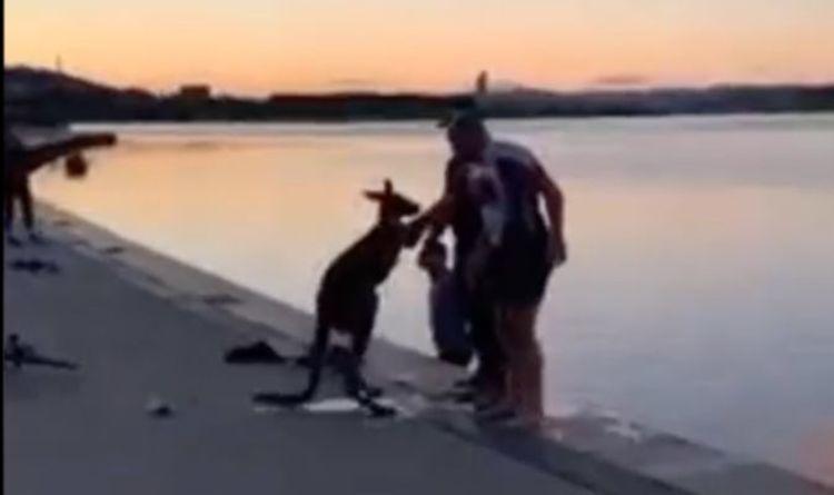 """Un kangourou de Canberra remercie les sauveteurs avec une poignée de main après être tombé dans un lac - """"Je vous remercie"""""""