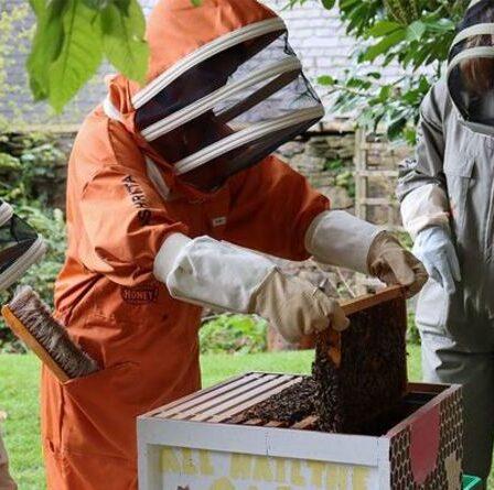 Pourquoi il y a un vrai buzz autour de l'apiculture