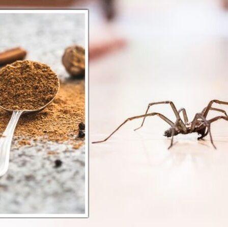 Araignées: un expert partage un « répulsif naturel » à 1 £ pour chasser les insectes de votre maison