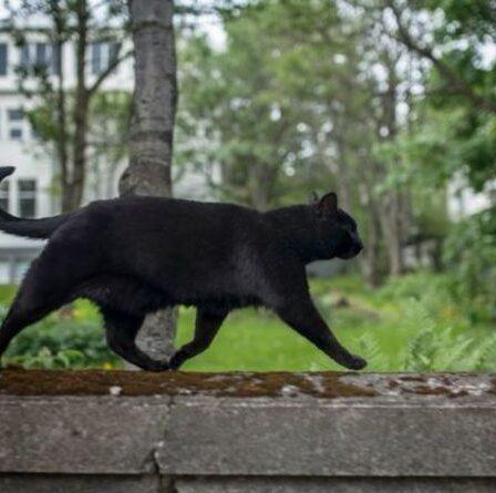 Mystère du `` piratage de chat '' en tant que voisin perplexe par une astuce de bouteille d'eau pour mettre en garde les animaux domestiques indésirables