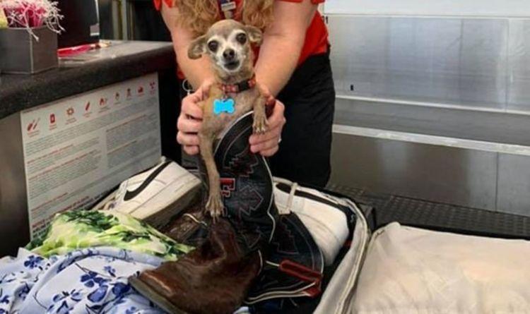 Un couple choqué ouvre une valise en surpoids pour trouver un animal de compagnie chihuahua caché avant le vol de Vegas